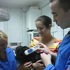 Электронное чипирование животных