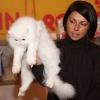 Выставка кошек 2009 - Экспертиза RUI