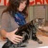 Выставка кошек 2012 - экспертиза RUI