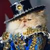 Выставка кошек 2011 - Кошачья вечеринка