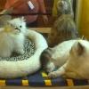 Выставка кошек 2005 Краматорск