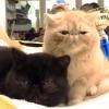 Выставка кошек 2006 Краматорск