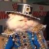 Выставка кошек 2011 Краматорск