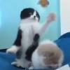 Выставка кошек 2012 Краматорск
