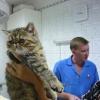 Опасны ли домашней кошке глисты и блошки