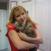 Кошки требуют любви
