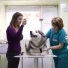Весенние болезни животных видео